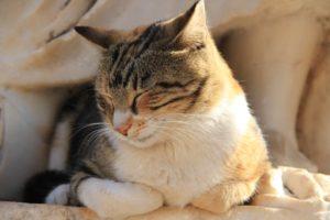 cat-868297_960_720