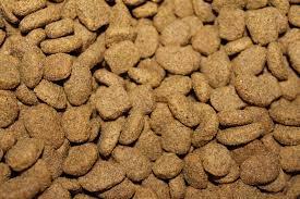 cibo secco cani