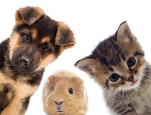 Mutua Per Animali Domestici Ecco Come Funziona