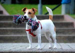 pettorina per cani