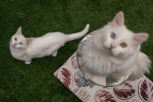 I Gatti Sono Al Sicuro Nel Vostro Giardino