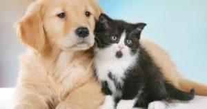 Cani E Gatti Chi Sono I Più Intelligenti